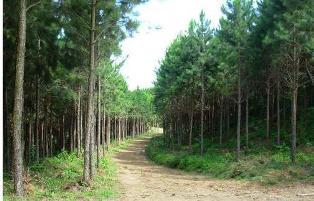 Foto: Divulgação / Área de reflorestamento está no roteiro