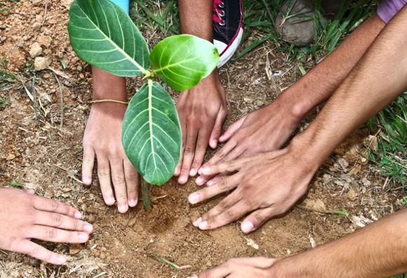 Alunos da escola Aurora Scodro Groff participam de plantio de mudas no CETH, em Indaiatuba