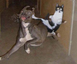 Onde está o gato xinim?