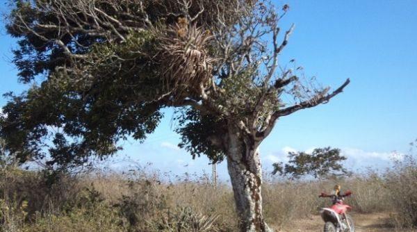 Os competidores passarão por paisagens características do sertão brasileiro