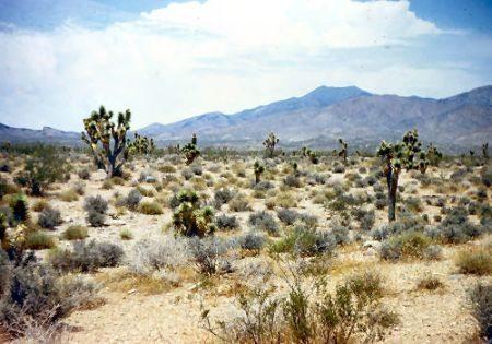 Paisagem típica do Deserto de Mojave na Califórnia (EUA)
