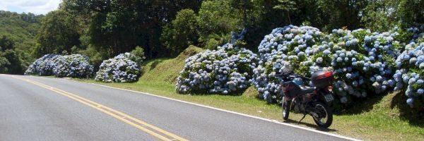 Em determinadas épocas do ano o trajeto é todo adornado por milhares de hortências floridas