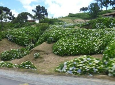Natureza exuberante na Serra Catarinense