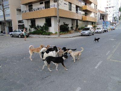 Cães no meio do cruzamento; os animais são guiados pelo instinto