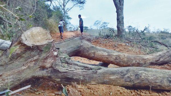 Obstáculos de alto grau de dificuldade estão sendo preparados para o Enduro da Serra neste domingo