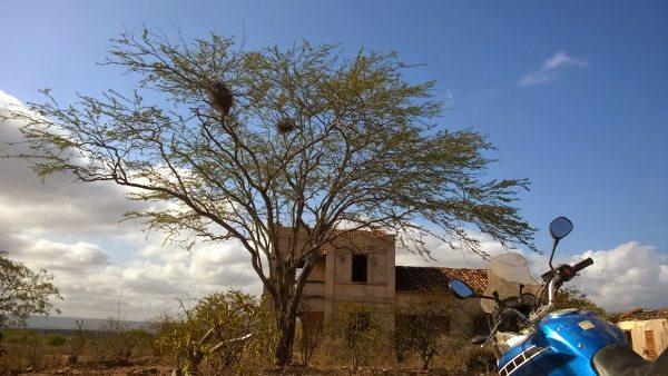 A rala vegetação do cerrado toma conta dos prédios abandonados
