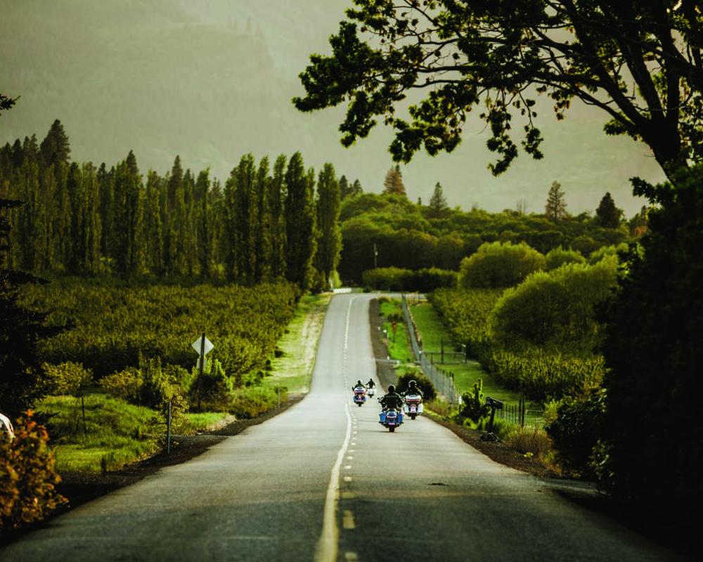 Programa Renew the Ride™ pretende plantar 50 milhões de árvores até 2025 – divulgação
