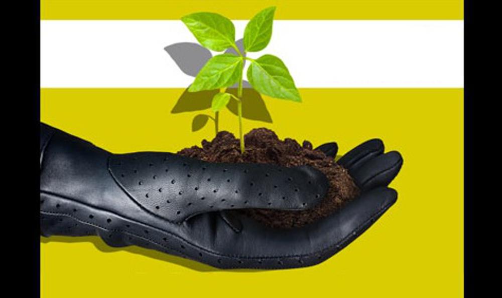 Programa pretende plantar de árvores até 2025