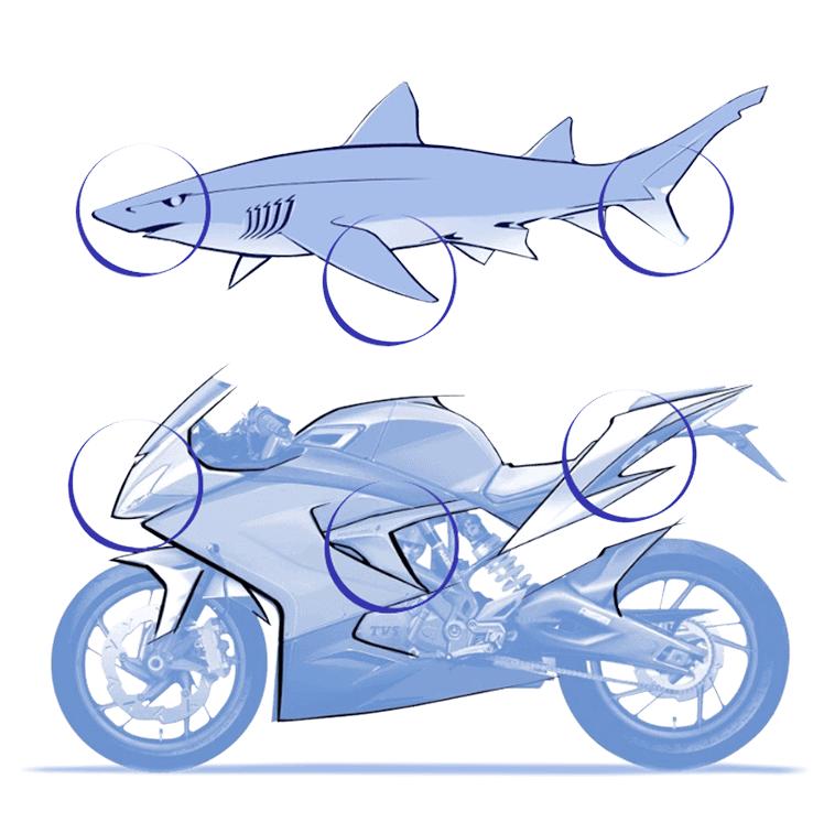Design inspirado nos tubarões